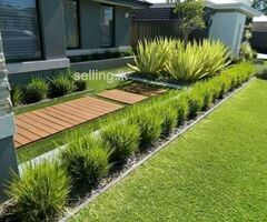 Dumbara Midula Grass Supplier Negombo