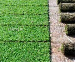 Dumbara Midula Grass Supplier Negombo
