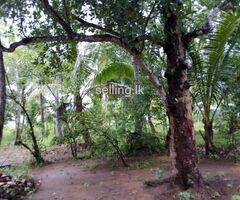 Land sale in Mahawilachchiya