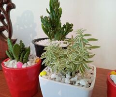 succulents and indoor plants with good looking pots for sale