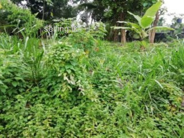 LAND FOR SALE IN BADULLA - KALUGALPITIYA
