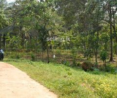 land for sale in kaluaggala