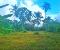 Land fir sale in Giriulla