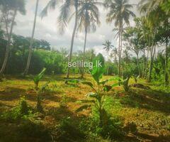 Land fir sale in Giriulla