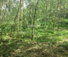 2 Acres  Rubber Land in Warakagoda for Sale