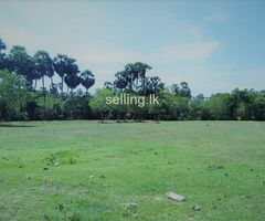Land for sale in Gokaralla kurunagala