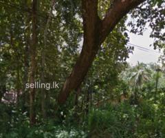 land for sale in Monaragala