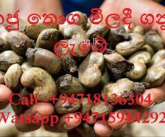 #Cashew #Kaju #Wholesale #කජු තොග මිලදී ගනු ලැබේ