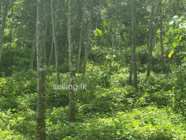 Rubber Land for Sale at Matugama
