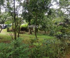 Land for sale in Naula