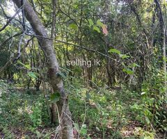Land For Sale in Sigiriya
