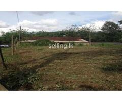 Immedietly sale land in kosgama