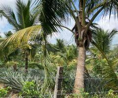 Land For Sale In Yakkaduwa-Ja-ela