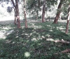 Land for sale in Mihinthale