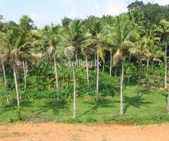 Valuable Land near to Embilipitiya