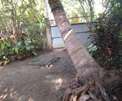 Home with land sale in chilaw