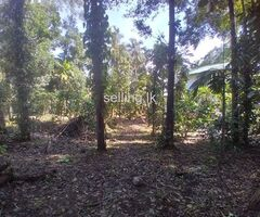 Land for sale in Palapathwela