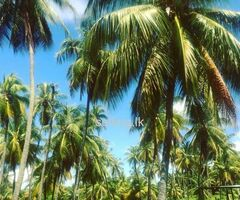 land sale in kurunegala