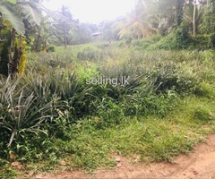 Land for sale in Dekatana Gampaha
