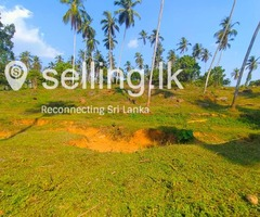 10 Acres of Valuable Coconut Land for Sale