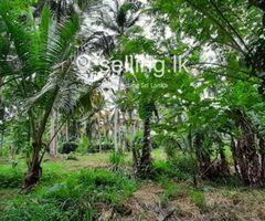 Coconut Land for Sale in Rambukkana
