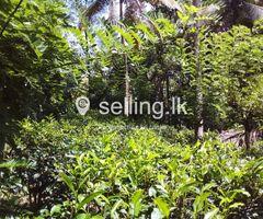Tea Land for sale in Aranayake Mawanella