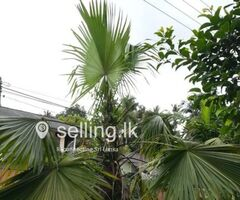 yellow bamboo plant and palm tree