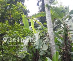 Matugama land for sale
