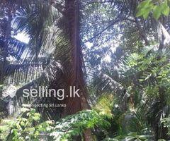 Land For Sale Immediate Polgahawela