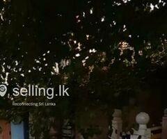 Shop for Sale in Matara