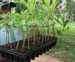 Seed Tray, Plant Starter Trays for Agriculture