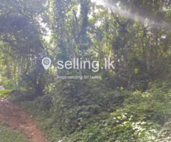 Land in Mirigama (Ambanawattha)