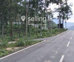 urgent  sale Land in Gurudeniya Kandy