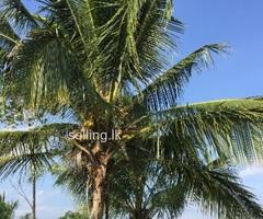 valuable land in suriyawewa