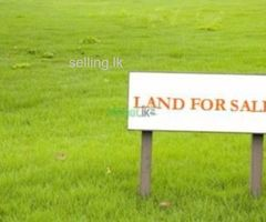 Land for sale in waligama