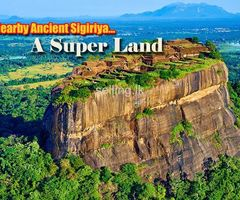 Super Land from Sigiriya - සීගිරිය ළඟින්ම සුපිරි ඉඩමක්