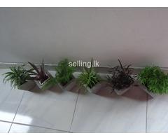 Miniature Indoor Gardens