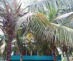 House for Sale in Hambantota