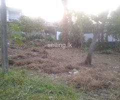10 or 15 perches block(s) of land sale in Pandaura