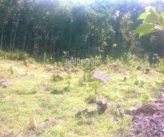 1 Acre Flat Land for Sale in Ratnapura