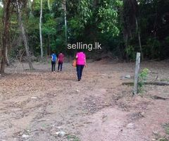 Land for sale at Kossinna