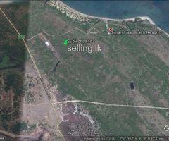 39 Acre Land in Pasikuda for Sale