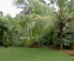 Land for sale(Near to the beach)