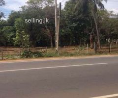 Land for sale in Habarana