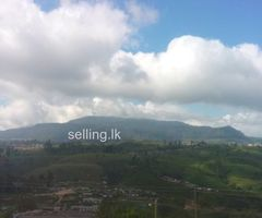Land for sale in Nuwara eliya