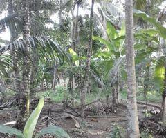 Coconut Estate