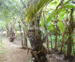 land for sale close to kurunegala town