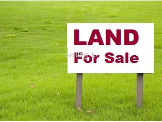 Land for sale in Anuradapura