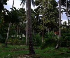 15 prch land in Katupotha