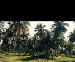 Land for sale in weeraketiya